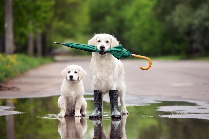 Tägliche Tierpflege mit Blütenwasser – Aromatherapie für Hund und Katze