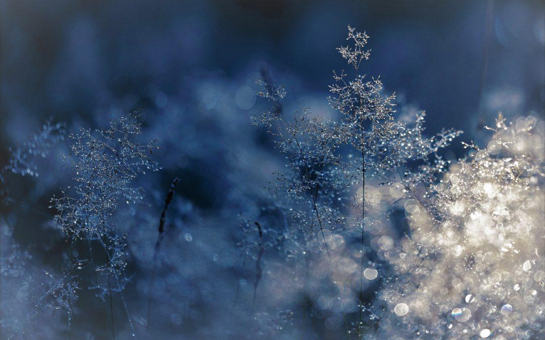 ✫ Fröhliche Weihnachtsgrüße und eine Rezeptempfehlung